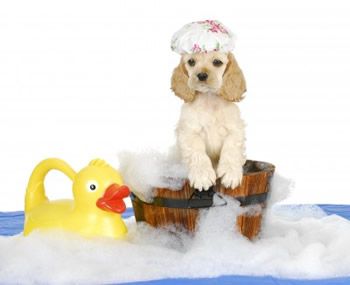dog-grooming-westchester